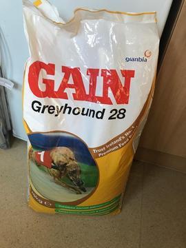 Gain dog food free big bag in Helston